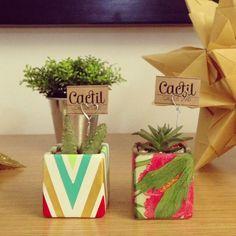 Cactil Cactus Land  Bogotá, Colombia vía @Angela Boyaca