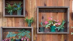 Dress a fence | Steal inspiration from an eye-catching California nursery where the planting ideas are free
