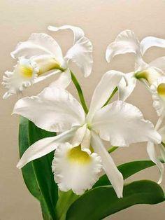 Choose-Diy: Orchid@@