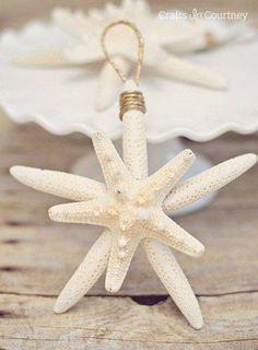 Starfish                                                                                                                                                                                 More
