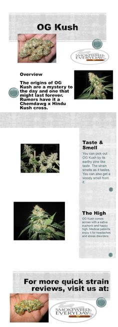 Join us at www.smokeweedeveryday.org for great galleries, quick strain reviews and good old fun with #weed !