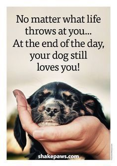 Your dog always love you! - Your dog always love you! Your dog always love you! Puppy Quotes, Dog Quotes Love, Animal Quotes, Dog Qoutes, Baby Quotes, Funny Dog Sayings, Funny Pet Quotes, Cute Puppies, Cute Dogs