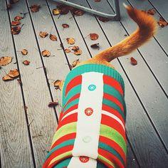 My little gingerbread man.  #Padgram
