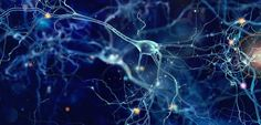 Our Parkinson's Place: Varying Thresholds for Parkinson's Protein Toxicit...