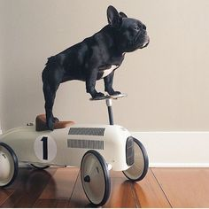 www.mini-mi.co.uk - These vintage style ride-on cars are now in stock and available in store and online, also available in red and navy/red too. Perfect for your little ones, boys and girls and look, you can teach your dogs tricks too!! Regram from @trotterpup xxx #vintagecars #vilac #rideoncars #retroracingcar #retro #tincars #minimigb #minimi #shopindependent #shoplocal #shopindependentthischristmas