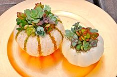 How-to Create a Succulent Pumpkin Planter | Make Flower Cocktails | Windy Wedding Flowers | Hanukkah Flowers