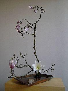 Blütenbaum | por Taijiquan-Schule Ortenau