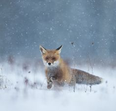 """In the snow storm"" by Thomas Muth"