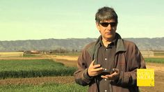 Who's Your Farmer California? Cover Cropping with Martin Burger (+playlist)