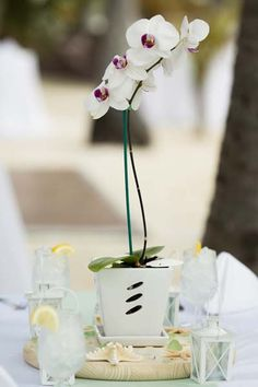 this could be a cheaper way of doing the table Centerpieces.. bit more too it than this one - but a plant rather than fresh?