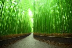 ARASHIYAMA BAMBOO GROVE,  in Kyoto, JAPAN: This bright green bamboo grove will transport you to a magical world.