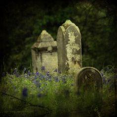 Bluebonnets and Headstones by Suzette.desertskyblue, via Flickr