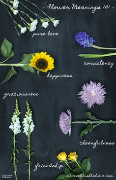 Flower Meanings Decoded: The Secrets of Your Favourite Bloom   Move Nourish Believe