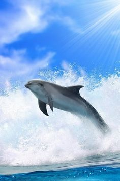 That's a beautiful dolphin. fact:bottle nose dolphins can spin in the air 3 times around or more before landing