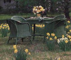 The vintage green wicker looks amazing among the naturalized daffodils. Wicker Tray, Wicker Table, Wicker Sofa, Wicker Mirror, Wicker Furniture, Garden Furniture, Outdoor Furniture Sets, Wicker Dresser, Wicker Purse