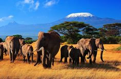 Mt. Kilimianjaro, the highest mountain in Africa, with the largest living land mammal.