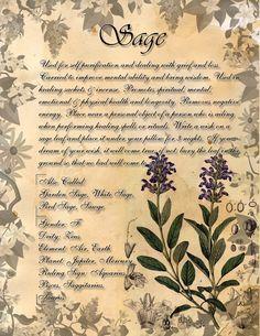 Book of Shadows: Herb Grimoire - Sage by CoNiGMa
