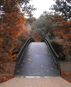 love the dramatic arch of the bridge