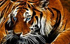 deviantART: More Like Tiger Reflection by billstelling