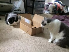 Cat duel: The Box-Off - credit to: swipurr.com