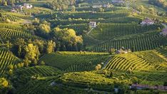 The new champagne... the rolling hills of Cartizze.