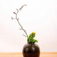 【yuzuki_chef_naoto】さんのInstagramをピンしています。 《春の訪れを感じますね‼︎ 庭にも梅が咲き雪どけの中で少しずつ花の季節、萌黄の季節を迎えようとしていますね‼️ ✨ さらに春らしさを・・・ そんな時はやっぱりいつものお花屋さんへ。 ✨ 菜花はこの時期としてはよく使ってますが、 ✨ ・・・菜花といえば、私も本業は料理人なのでついつい料理にすることを考えてしまいますが、 湯がいてお浸しにしたり、椀種として真鯛と合わせたり、刻んで菜の花飯にしたり・・・と ✨ 今回の菜の花は花材ですので、花も咲いて緑と黄色のコントラストがちょうど良くなったところで生けました。 ✨ そして、更なる春らしさ・・・ 「桜」を花屋さんで見つけました。 ✨ やっぱり日本の春といえば桜ですよね。 当店の庭も4月の2週目ぐらいには池の周りのソメイヨシノが花を咲かせます。 夜のライトアップはまさに幻想的な空間を作り出します。 ✨ ということで、春の走り。 一足先に店内、お座敷に満開の桜をご用意しました。 買った時はまだまだ蕾でしたが、時が経ち、花が咲き、見頃を迎えました。 ✨…