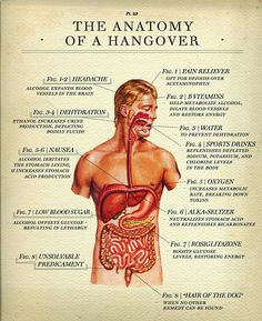 The Anatomy of a Hangover