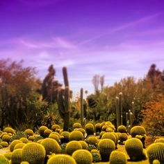 Desert Garden at the Huntington Library Huntington Library, Cactus Plants, Garden, Garten, Cacti, Gardening, Outdoor, Home Landscaping, Tuin
