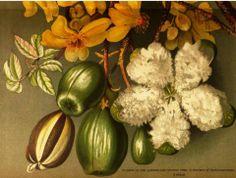 Cotton Flowers Queensland - 1898