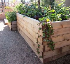 1000 images about vegetable gardening on pinterest How deep should a raised garden bed be