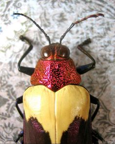http://i.livescience.com/images/i/18636/original/jewel-beetle-yellow.jpg