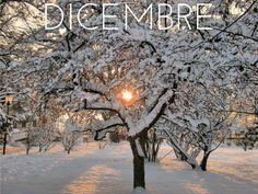 Eh si… dicembre è arrivato – e insieme a lui anche il freddo. Manca poco a Natale: feste, vacanze e relax – non vedo l'ora di godermi qualche bel weekend romantico sulle piste da sci! Per essere quindi al massimo della forma e assolutamente pimpanti, vediamo su quale frutta e verdura dobbiamo puntare.  #frutta #verdura #dicembre #frutta_di_stagione #verdura_di_stagione #nutrizione #alimentazione #cibo #food