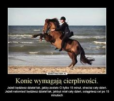 Horse Art, Of My Life, Animals And Pets, Passion, Horses, Sport, My Love, Funny, Quotes