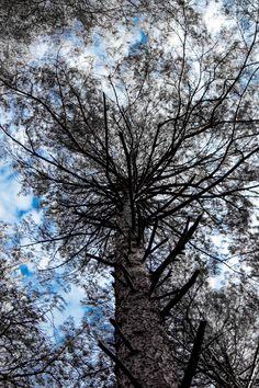 Tree - null
