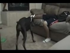 If you watch this 100 times you'll still laugh!!