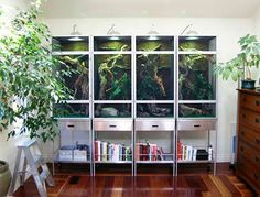 Clean, stylish reptile cages in an office, doubling as storage. Love! Source unknown.