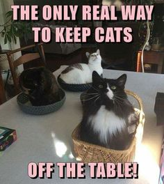 Heehee. Tap the link for an awesome selection cat and kitten products for your feline companion! #CatLady