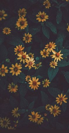 Flower Iphone Wallpaper, Iphone Wallpaper Vsco, Sunflower Wallpaper, Tumblr Wallpaper, Flower Backgrounds, Nature Wallpaper, Galaxy Wallpaper, Wallpaper Backgrounds, Aesthetic Backgrounds
