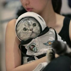 A cat wore a space helmet. | The 65 Cutest Things That Happened On Instagram In 2013 #humor #cat @BadgerMaps