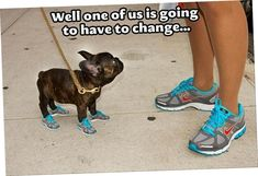 Today 38 Best Funny images - LOL MANIA CLUB #dogsfunnyshaming