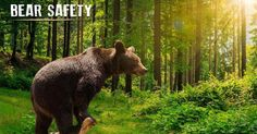 Bear Safety: How To Be Bear Aware #NationalParksDepot #NPD #bears #bearsafety #safetytips