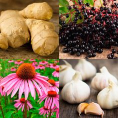 Use Antiviral Herbs to Boost Immune System