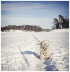 Sunny winter afternoon. Pet Portraits, Sunnies, Snow, Pets, Gallery, Winter, Outdoor, Winter Time, Outdoors