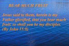 HOLY WORD: BEAR MUCH FRUIT