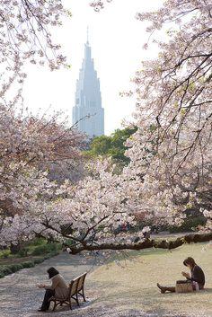 Shinjuku Gyoen National Park. It looked exactly like this today, cherry blossoms in full bloom! #sakura #Tokyo #Japan