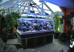427 gallon sunroom reef aquarium