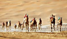 The Liwa Moreeb Dune Festival on January in the Liwa desert, 250 kilometres west of the Gulf emirate of Abu Dhabi. Hump Day Camel, Travel Destinations, Travel Tips, Camels, Photo Diary, United Arab Emirates, Abu Dhabi, Cool Pictures, Racing