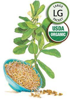 Sprouts Fenugreek Organic Seeds
