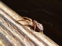 #Pinceladas de #Otoño... Huida #Araña Carpintera