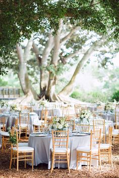 Lamour Platinum // NK Productions // Marie Selby Botanical Gardens